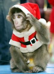 Символ 2016 року мавпа,  мавпочка в оренду